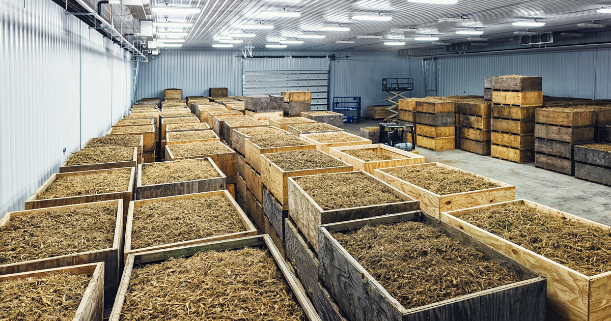 baumann_farms_wausau_wisconsin_ginseng_farmin_commercial_photography_advertising_portrait_midwest_photographer_30