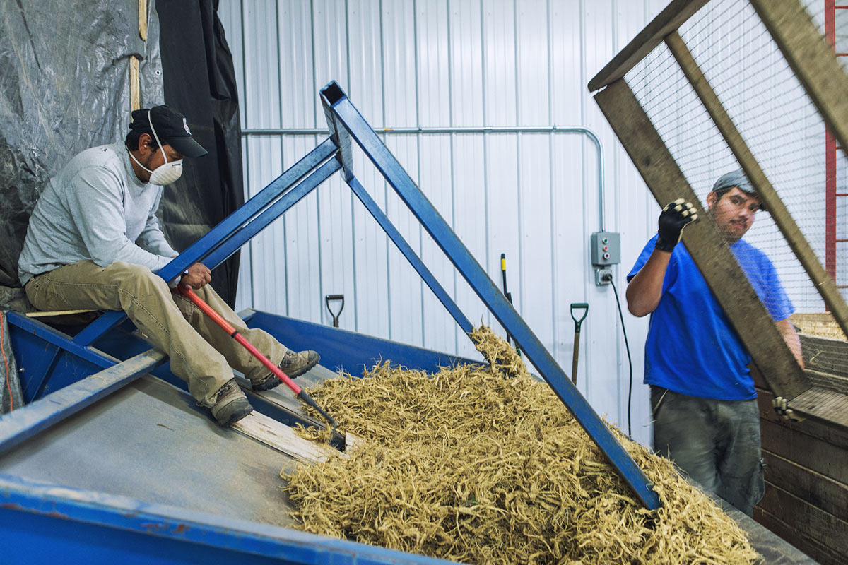 baumann_farms_wausau_wisconsin_ginseng_farmin_commercial_photography_advertising_portrait_midwest_photographer_45